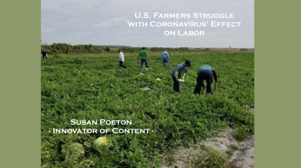 U.S. Farmers Struggle with Coronavirus' Effect on Labor